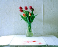 13.-tulips-and-raspberries-2018 thumbnail